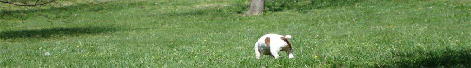 Dave's Web Demo Blog header image 2